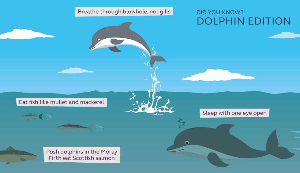 Illustration and information about dolphins