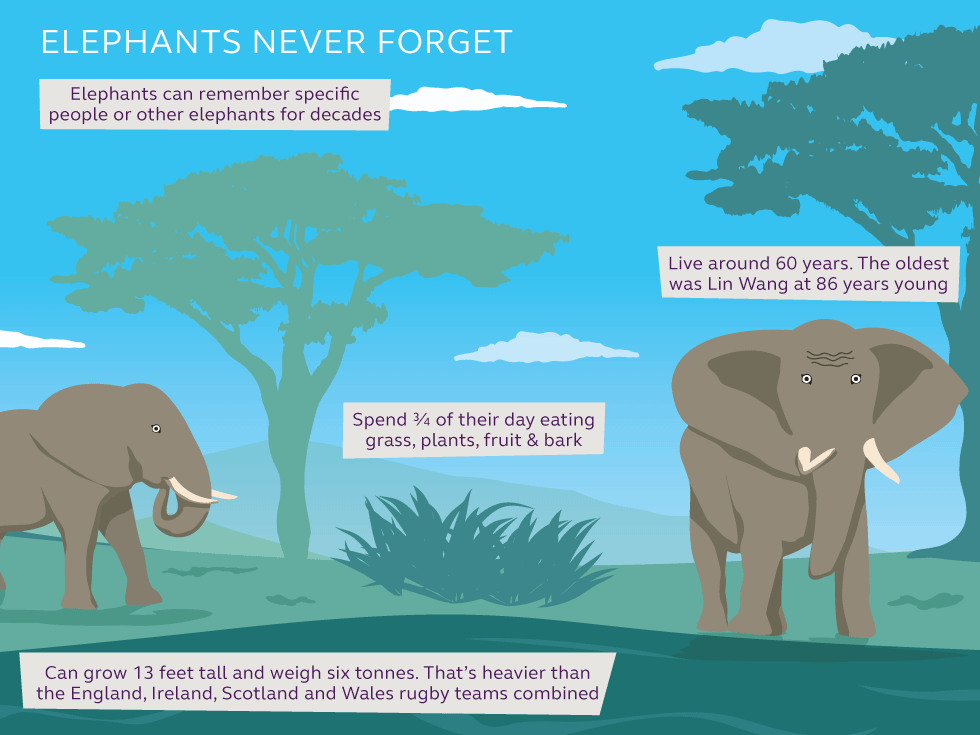 Illustration and information about elephants