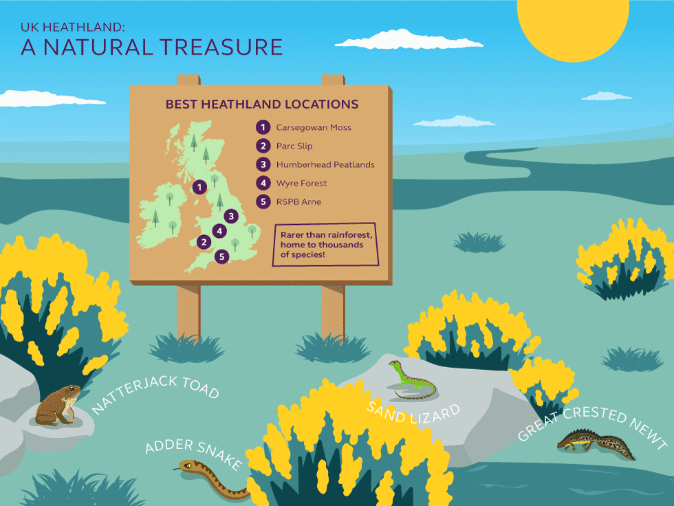 Illustration and information about heathland locations